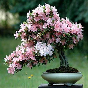 گیاهان گل دار و زینتی