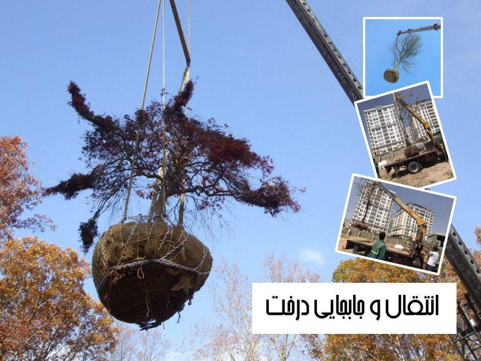 شرکت جابجایی درختان