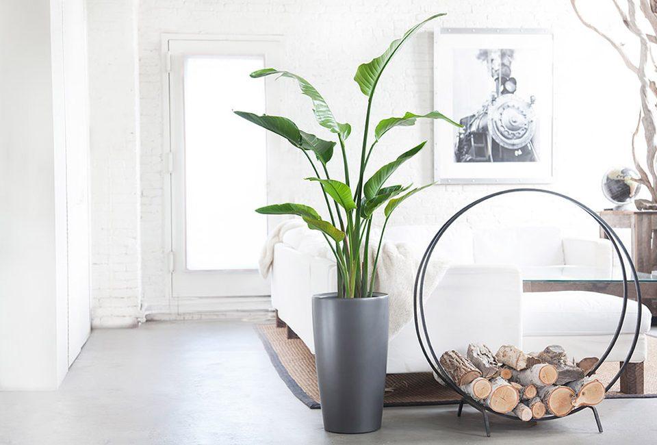 انتخاب گل و گیاه آپارتمانی مناسب برای منزل