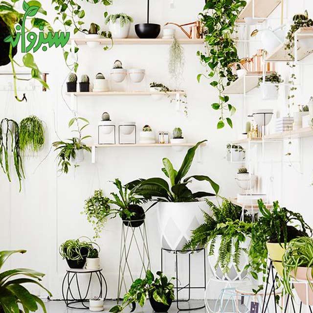 روش تعویض گلدان گل و گیاه آپارتمانی