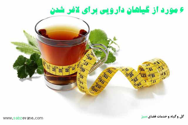 گیاهان دارویی لاغری و کاهش وزن