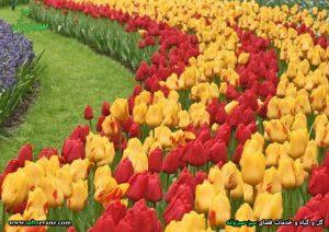 گلهای فصل بهار و گل لاله