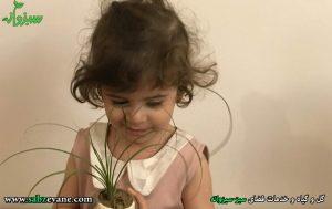 تهیه گلدان و گیاه برای آموزش کودک