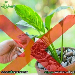 تغذیه بیش از حد گیاه ممنوع-min