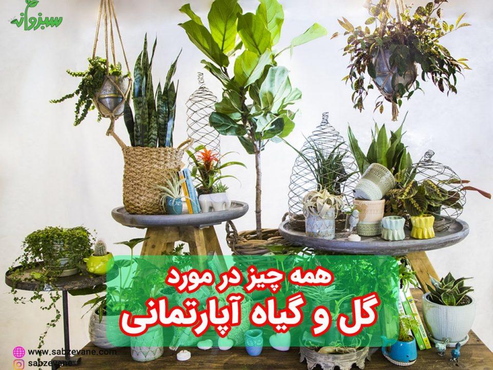 نگهداری و پرورش گیاهان آپارتمانی