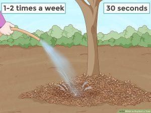 آبیاری پس از کاشت