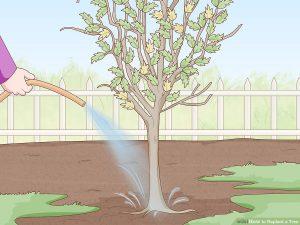 آماده سازی درخت قبل از جابجایی