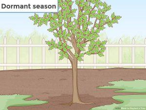 جابجایی درخت و فصل خواب درختان