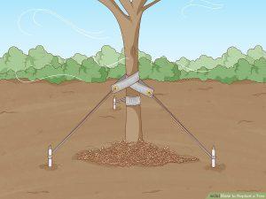 مهار درختان جابجا شده
