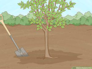 کاشت درخت